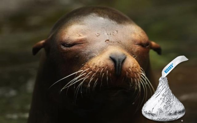 A seal with a kiss