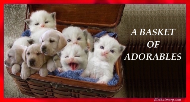 a-basket-of-adorables